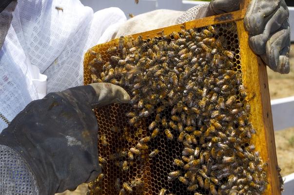 Методы пчеловодства