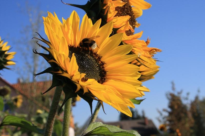 Пчелы в октябре