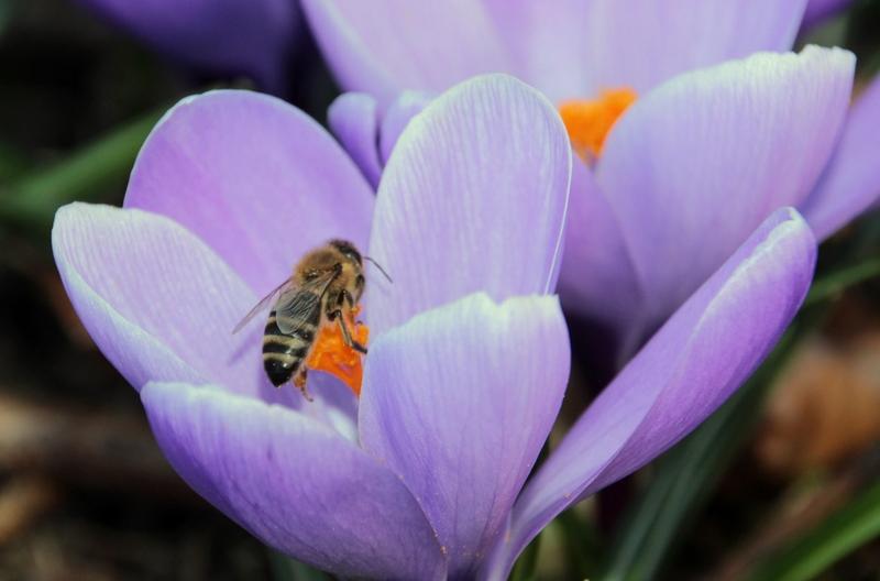 Пасека в марте