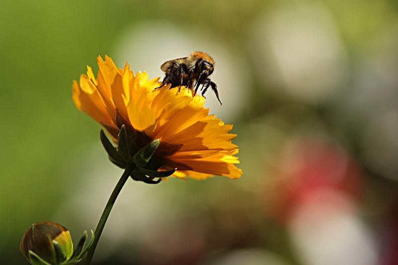 Пчелы в сентябре на пасеке