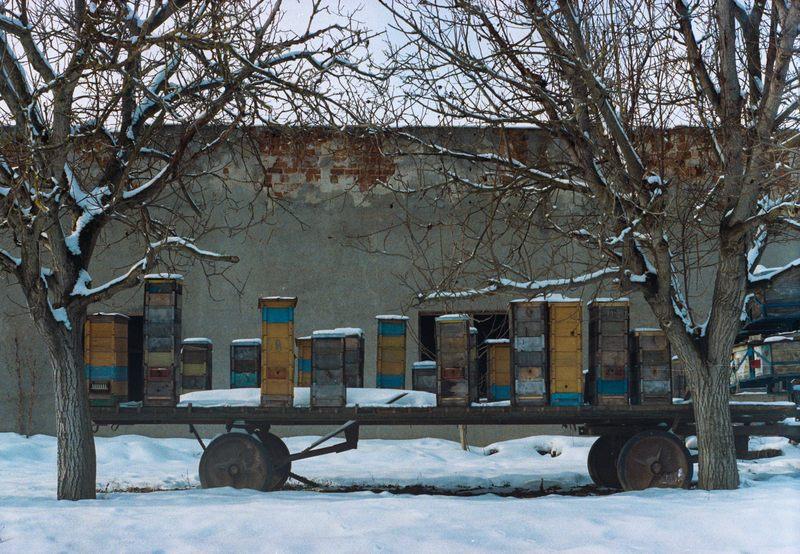 Пчёлы на сильном морозе зимой